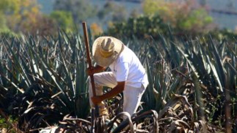 González Estrada creó en 1951 la marca Tres Magueyes, que años más tarde...