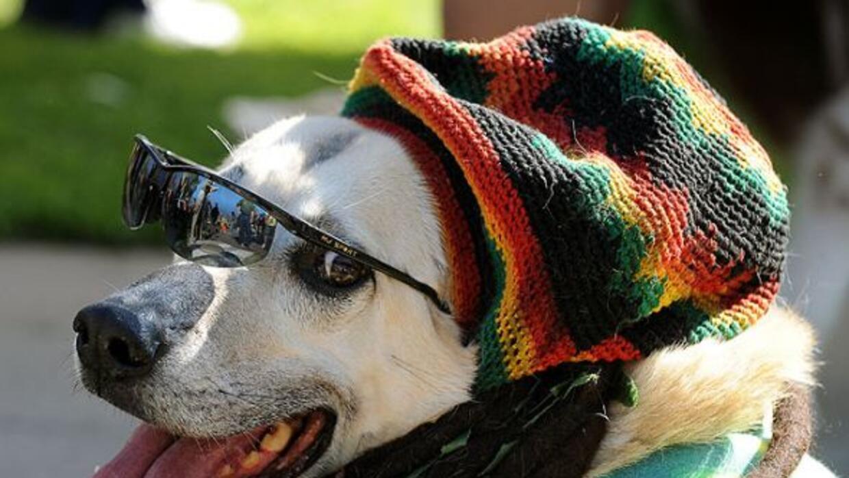 En Halloween los perros también se disfrazan.