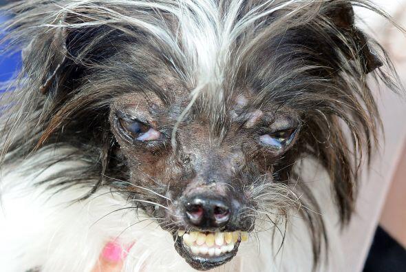 Holy Chandler es la dueña de este simpático perro, quien lo recogió de l...