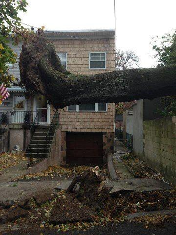 Marcelo Mendez nos envio esta foto de este árbol que el viento arrancó d...
