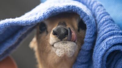 El Zoo Miami tiene un nuevo miembro, ¿sabes qué animal es?