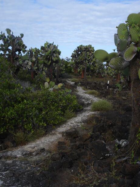 Si bien se conoce más por su riqueza marina, en la vegetación de Galápag...