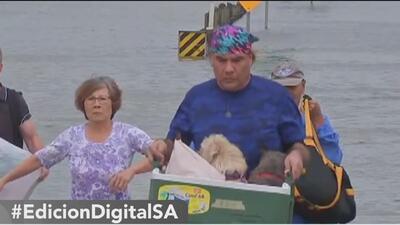 San Antonio recibe a animales rescatados por el paso de la tormenta tropical Harvey