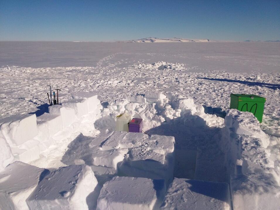 La Antártida se derrite y las moscas domésticas están tomando el control...