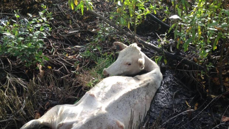 El animal se halla antes de Ciudad Cristiana, en dirección a la reserva...