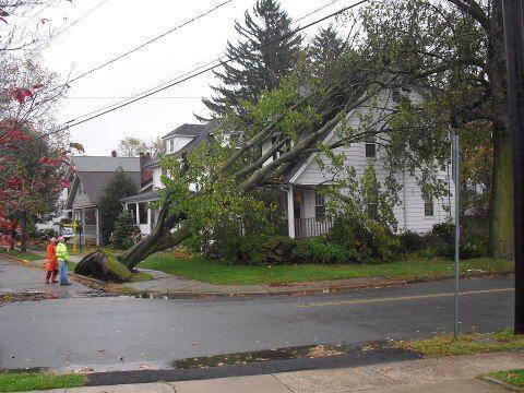 Mucha precaución porque los árboles están cayendo sobre cables de electr...