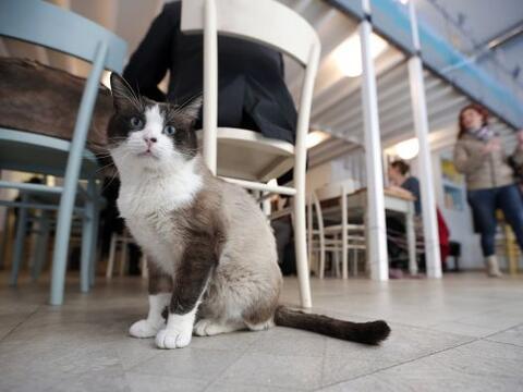 MiaGola es una cafetería 'petfriendly' especial para mascotas com...