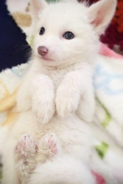 Rylai es el epítome de la mascota perfecta: inteligente, obediente y bella.