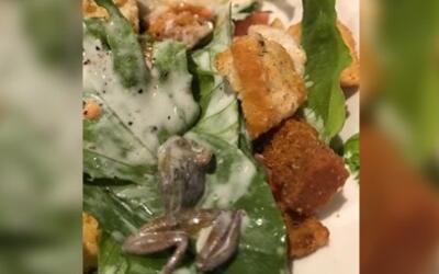 La rana muerta que fue encontrada en una ensalada en un restaurante BJ's...