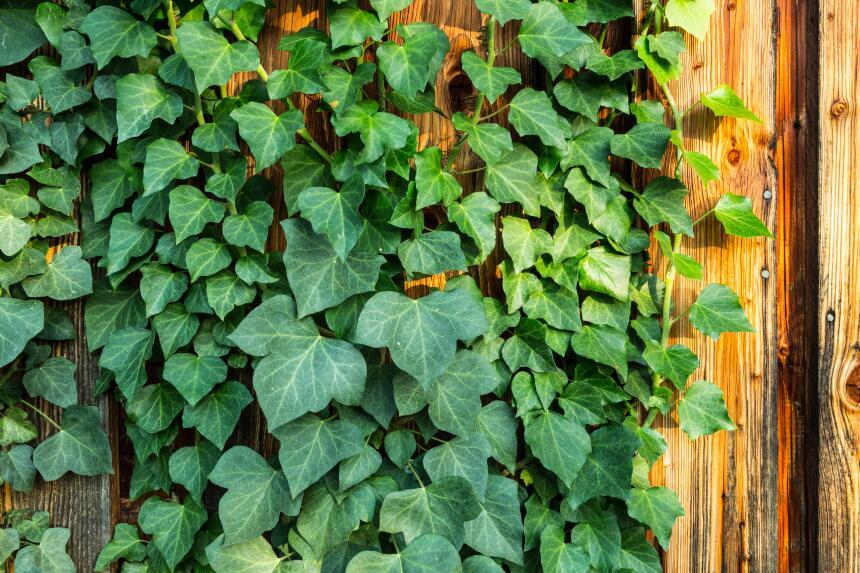 Plantas ambiente