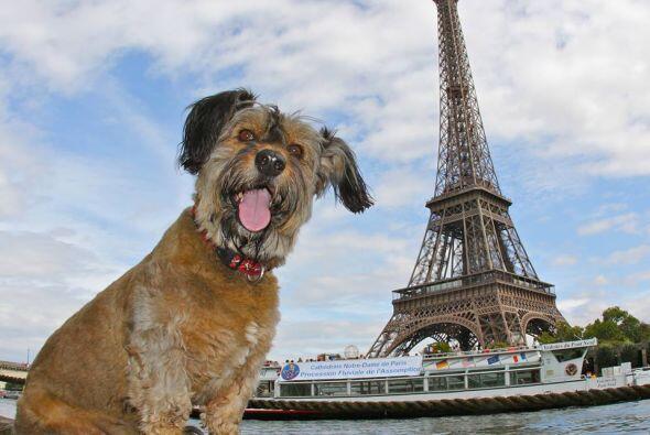 Oscar estuvo en lugares hermosos. Aquí lo  vemos en París, nada menos qu...