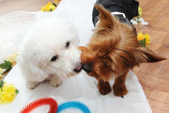 La dueña de estos perritos decidió organizarles una celebr...