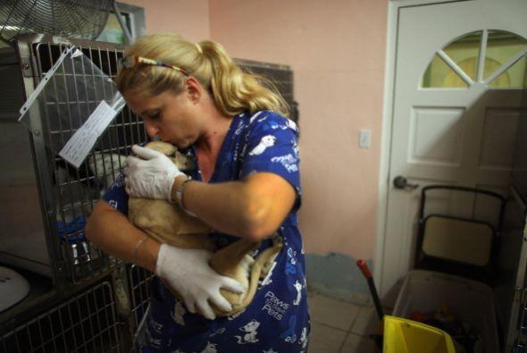 Adoptar a un perrito es un acto de amor, le darás el cariño que necesita...