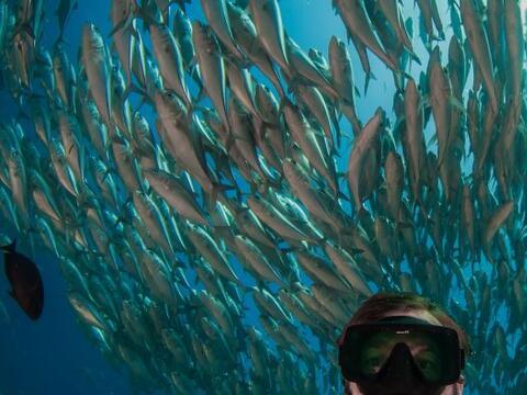 Buzos quedaron atrapados en medio de un enorme banco de peces.