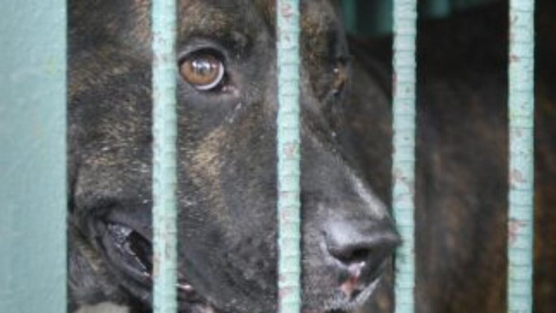 La mujer murió a consecuencia del ataque de sus perros. (Imagen de Archi...