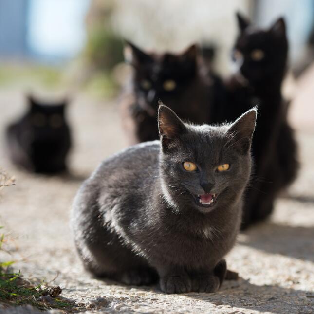 Conoce el misticismo del gato negro  4.jpg