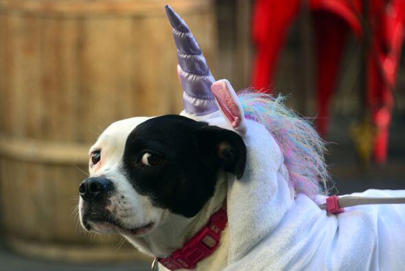 Uno más intentó sentirse unicornio.