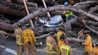 Retiran el árbol que mató a una persona tras en Pacific Be...