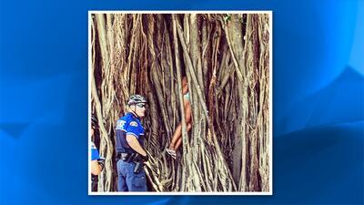 Policía de Key West rescató a mujer atrapada dentro de un...