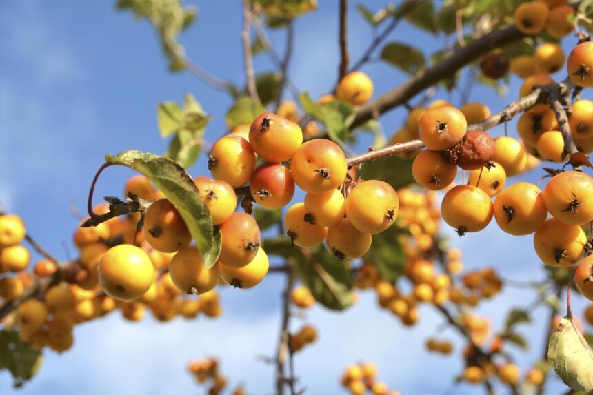 Rboles frutales para tu jard n univision for Tipos de viveros frutales