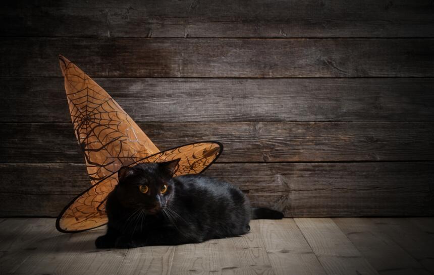 Conoce el misticismo del gato negro  8.jpg