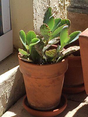 Sello original. Si la decoración de tu casa es de impronta mexicana, los...