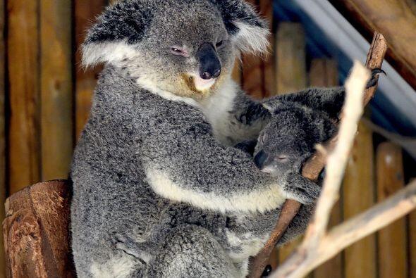 En la sección de Australia en el zoológico de Los Ángeles, están ocurrie...