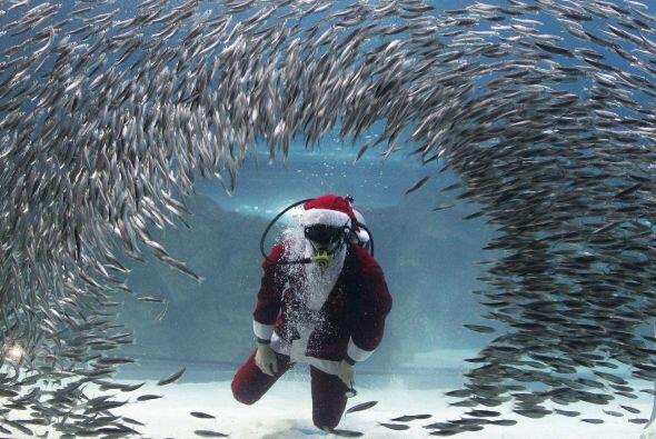 Santa es muy acuático y hasta con los peces convivió este año.