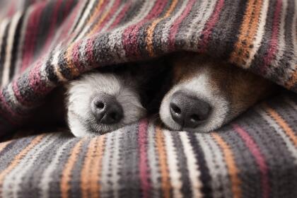 10 consejos para ayudar a los animales a resistir el frío istock-5193882...