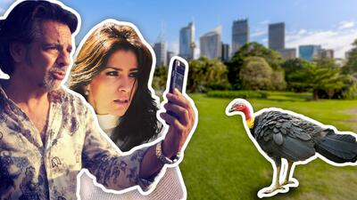 """Eugenio Derbez y Alessandra Rosaldo sorprendidos por los curiosos """"perros callejeros"""" de Australia"""