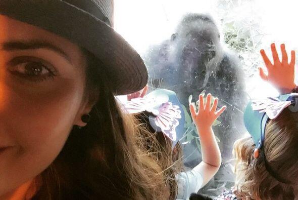Van al zoo.
