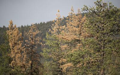 Estudio advierte que el condado de Los Ángeles se está quedando sin árboles