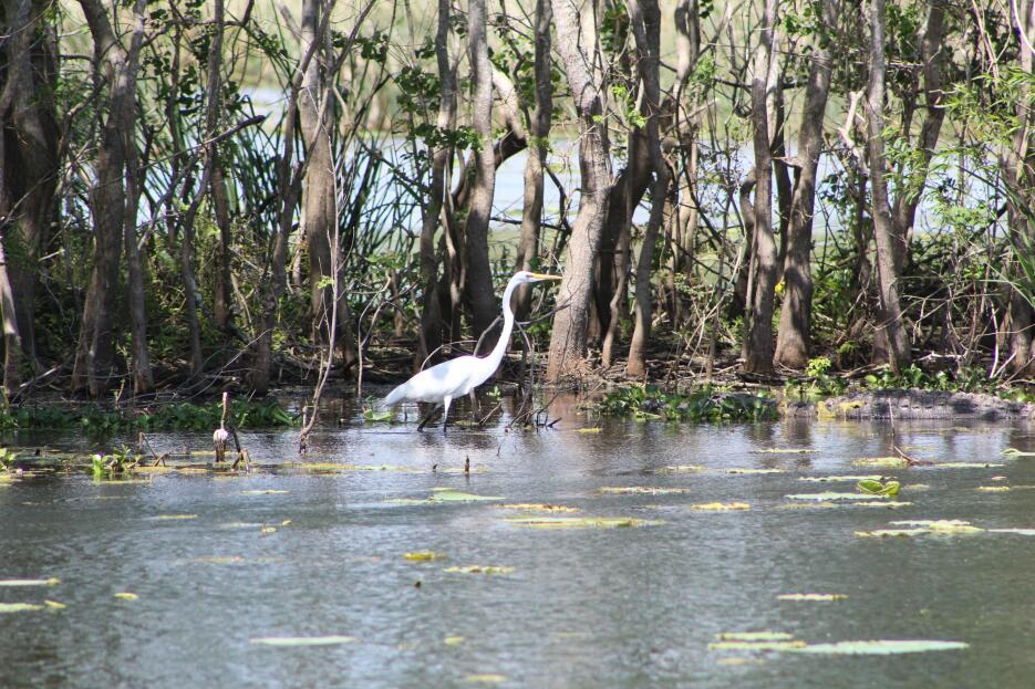 Brazos Bend, un parque que reúne las especies más salvajes de Texas