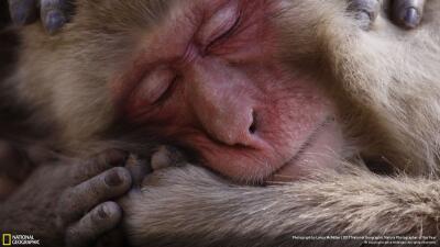 Las fotos de National Geographic que nos recuerdan la fragilidad del planeta