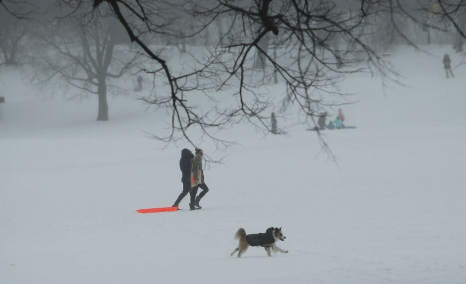 Los perros también disfrutan de la nieve en el Prospect Park de Brooklyn.