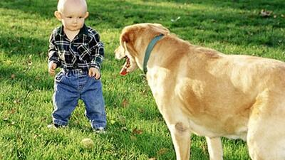 Dog and toddler.