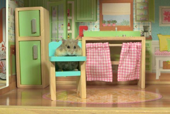 Este pequeño roedor se ha vuelto famoso en las redes con un video que mu...