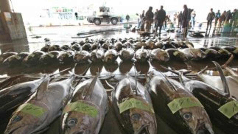 TEPCO ha detectado peces con un nivel de cesio radiactivo hasta 380 vece...