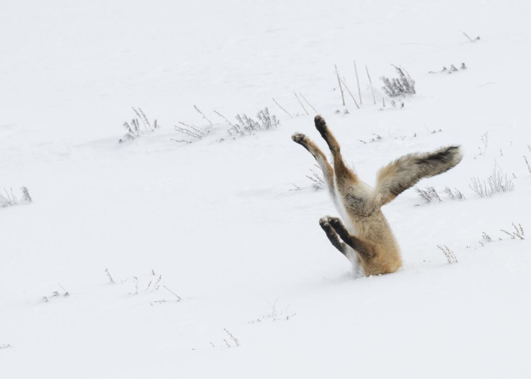 The funniest wildlife photos of 2016 BM_COMEDY_WILDLIFE_AWARDS_02605515_...