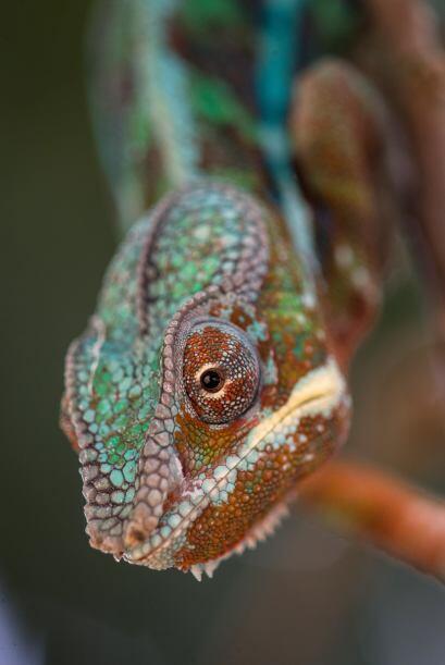 Si sujetas un lagarto y te atreves a lamerlo de la cabeza a la cola, ten...