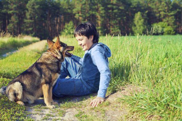 Se considera una raza equilibrada, es un perro amigable especialmente co...