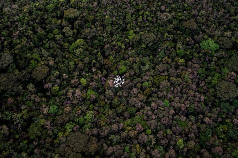 El Amazonas representa más de la mitad de las selvas tropicales que qued...