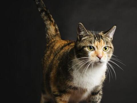 Cola en alto. Cuando tu gato levanta su cola como el asta de una bandera...