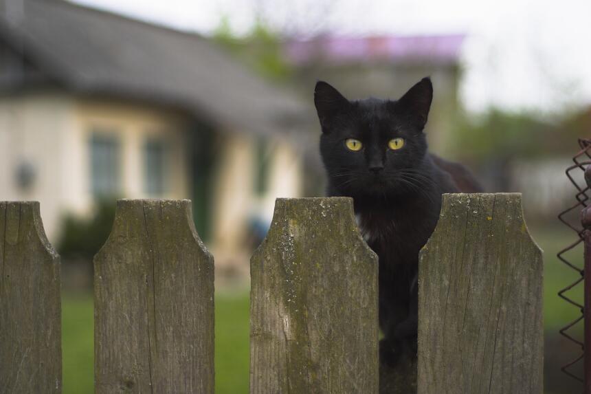 Conoce el misticismo del gato negro  1.jpg