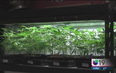 Con las nuevas leyes, la marihuana medicinal es deducible de impuestos e...