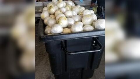 Agentes de la Patrulla Fronteriza incautaron casi dos toneladas de marih...