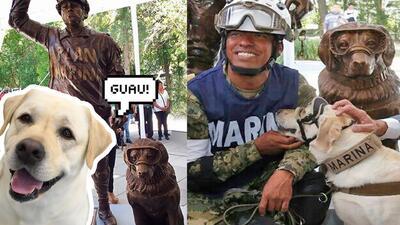 Frida, la perrita heroína del terremoto en México, tendrá su propia estatua