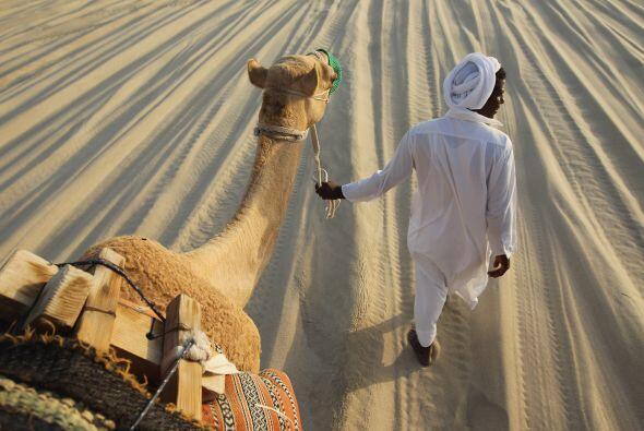 Paseando el camello durante el concurso.