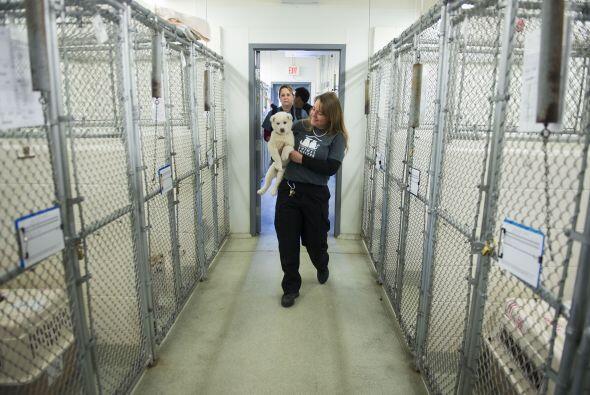 Los diferentes refugios que resguardan a los perros han mencionado que t...
