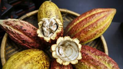 El cacao, no el chocolate, es el aliado de tu salud